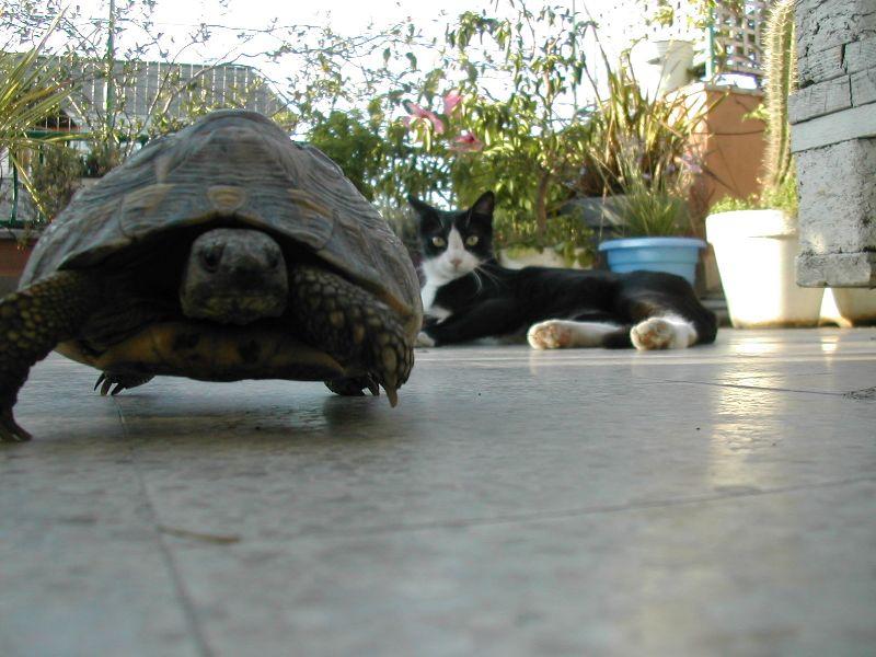 Ruga e il gatto di Ricky