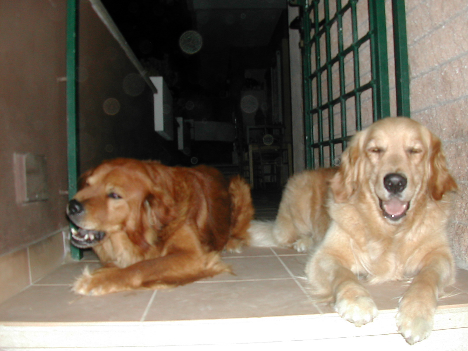 Tobby e Frida